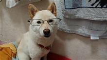 メガネの~愛犬‼️