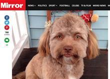 あの人面犬「リアルしずえさん」が大人気に!似ている人を探し始める