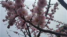 春のザワワ~😁