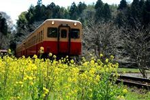 肌色と赤色の列車に黄色い花は・・・