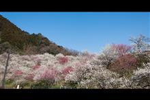 春の散策に行って来ました。