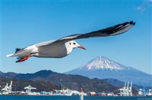 富士山とカモメ 📷