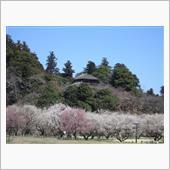 春の訪れを感じ、水戸の偕楽園へ