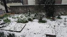 3月21日、雪