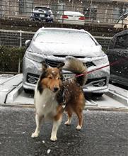 雪、弄りも散歩もお預けです