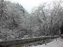 雪のヤビツ