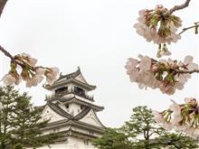 高知城の桜…