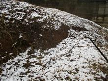 季節外れの降雪