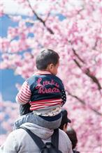 桜のある風景 2018 【六義園】