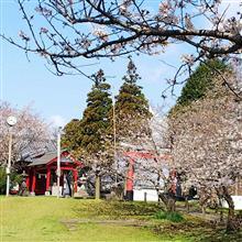 近所の神社公園で一時花見