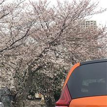 桜とおれんじのーと