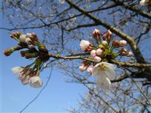 桜前線を追って熊本に!折角なので、桜肉がお土産ですw