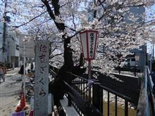 桜並木にさそわれて