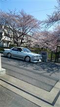 桜とクラウン