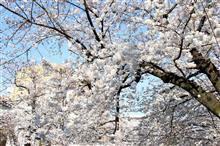 お花見のシーズンですね~♪
