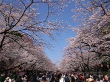 花見激戦地の上野公園へ
