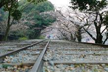 桜、桜(^o^)