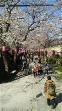 桜の称名寺