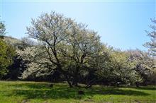 三舟山でお花見散歩 2018