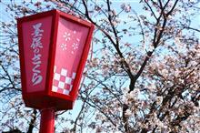 桜が咲いたらしいので…