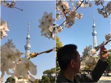 隅田公園の桜🌸