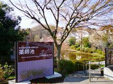 町田薬師池公園 四季彩の杜