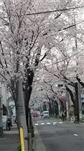 もう春ですね!!