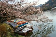 桜🌸を撮影しに行った😆