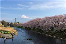 ★桜満開!★