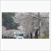 桜が咲いた🌸