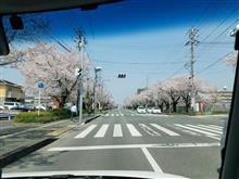 健軍自衛隊通り&弁天山(合志市)の桜(2018.03.27(火))…✨🌸✨