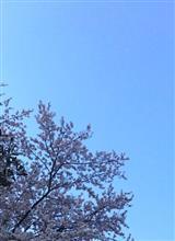 春ですなぁ