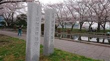 史跡『旧相模川橋脚』の桜