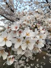 (*´꒳`*) 春爛漫!週末が楽しみですネ