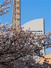 桜を見れば