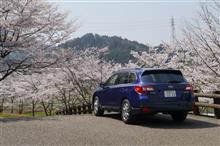 今年の桜は...