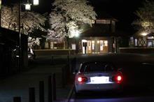 明覚駅の満開夜桜見て来ました