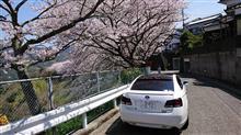 桜満開っすね!!