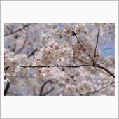 桜_2018_Vol.2