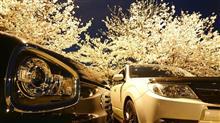 桜を撮りに行ってきた🎵