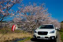 やっと桜を見に♪