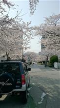 ぷらっと寄り道で桜撮影