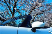 桜の開花と共に…