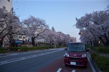 さくら!サクラ!桜!