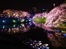 🌸東京桜の名所 千鳥ヶ淵 夜桜 2018🌸