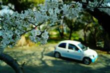 今日も行くぞ!桜リレー!よ~いどん 三┏( ^o^)┛