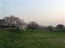早すぎる桜