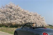 近場お花見ドライブ