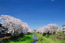 3月最終の金曜日は通院と桜見物...
