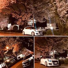 出勤前の夜桜🌸